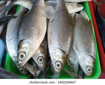 fresh milkfish on the container