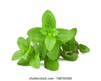 Fresh mint bunch isolated on white background