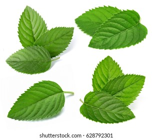 Fresh mint collection isolated on white background