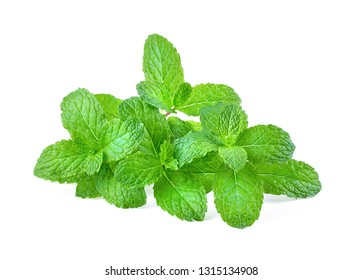 Fresh mint full depth of field isolated on the white background