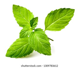 fresh mint herb isolated on white background