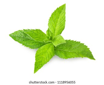 Fresh mint isolated on white background with clipping path