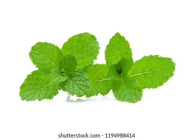 Fresh mint isolated on the white background.