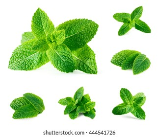 Fresh mint isolated on white. Set