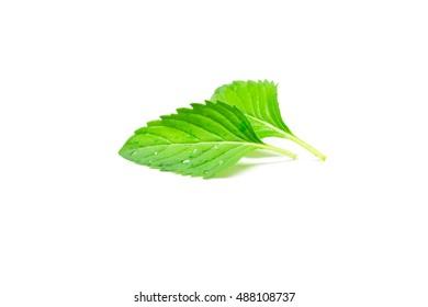 Fresh mint isolated on white background