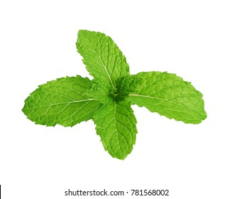 Fresh mint isolated on white background, Top view.
