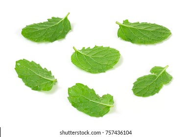 Fresh mint leaf set isolated on white background