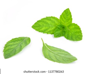 Fresh mint leafs isolated on a white background