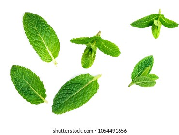 Fresh mint leaves collection  isolated on white background, green pattern. Set of peppermint, close up