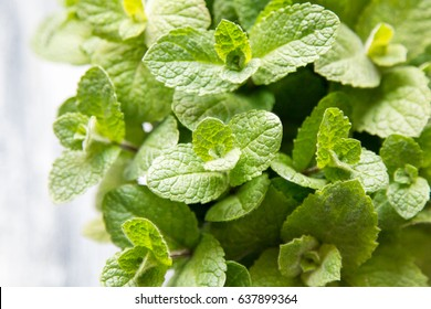 Fresh mint leaves herb. selective focus, copy space.