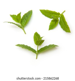 Fresh mint leaves isolated on a white studio background.