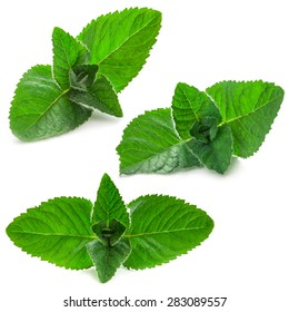 Fresh mint leaves isolated on the white background. Studio macro