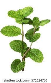 fresh mint leaves isolated on white background. close up