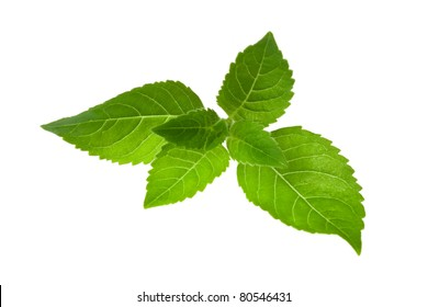 Fresh mint leaves, isolated on white.