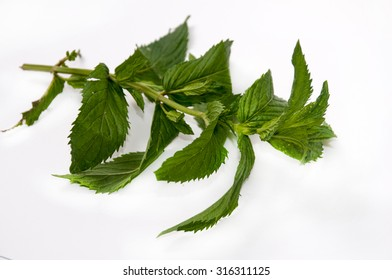 FRESH MINT LEAVES OVER WHITE BACKGROUND.