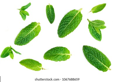 Fresh mint leaves pattern isolated on white background, top view. Close up of peppermint, lemon balm