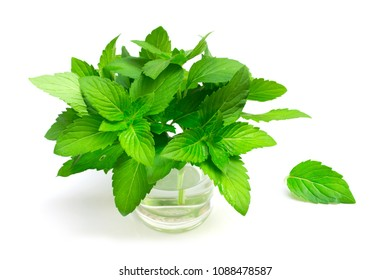 Fresh mint on glass isolated on white background
