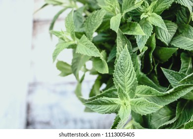 fresh mint on a light background, copy space.