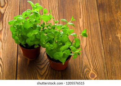 fresh mint on the table in pots