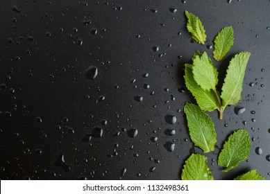 Fresh mint pepermint leaves, black board, water drops. Summer cocktail background. Copy space.