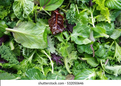 Fresh mixed salad field greens piled closeup view