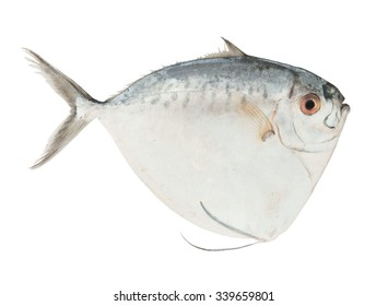 Fresh moonfish isolated on white background