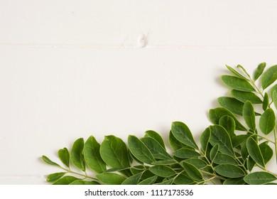 Fresh moringa leaves- Moringa Oleifera