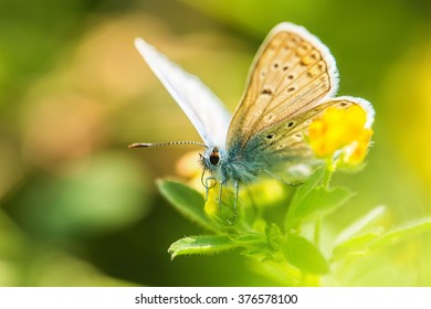 Fresh morning dew on a spring grass and butterfly, natural background, spring time concept