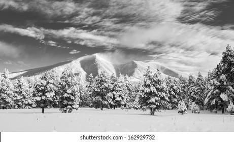 Fresh Mountain Snow (San Francisco Peaks, Arizona)