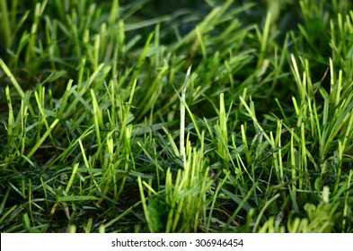 Fresh moved grass