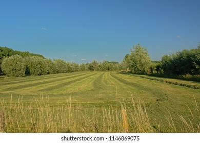 Fresh mown meadow with trees under a clear blue sky in Kalkense Meersen nature reserve, Flanders, Belgium. Part of the Sigmaplan which protects Flanders from flooding.