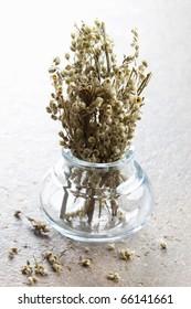 fresh mugwort in a glass