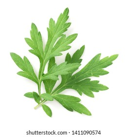 fresh mugwort leaves isolated on white background, top view