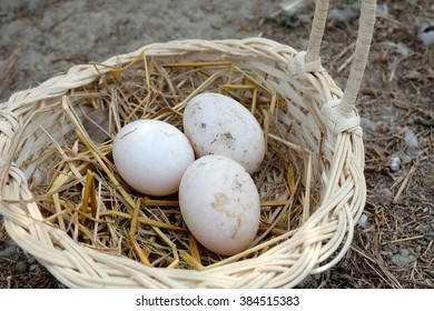 fresh Muscovy duck eggs in the basket  on the ground