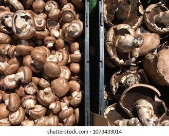 Fresh Mushroom at the Farmer's Market