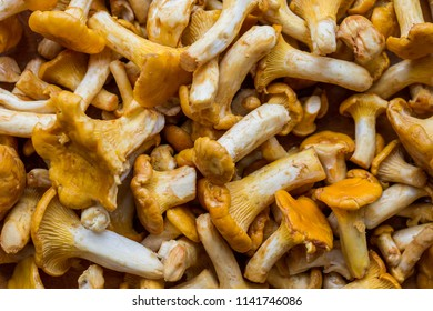 Fresh mushrooms chanterelle top view