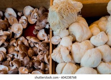 Fresh mushrooms at an outdoor market