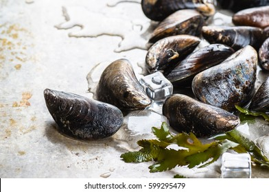 Fresh mussels on old metal background with ice