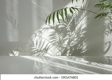 Fresh natural branches of evergreen tropical palm plant with decorative shadows on a light wall and glossy table surface. Game of shadows on a wall from window at the sunny day. - Shutterstock ID 1901476801