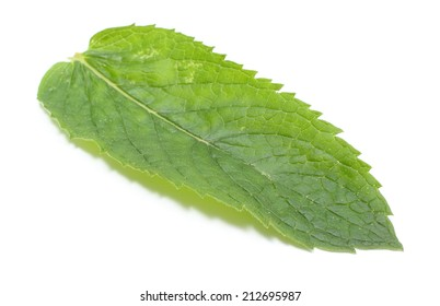 Fresh natural green leaf of mint on white background, concept for healthy nutrition