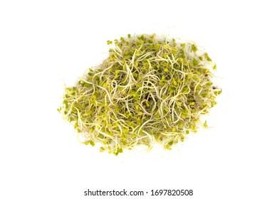 Fresh natural young broccoli sprouts