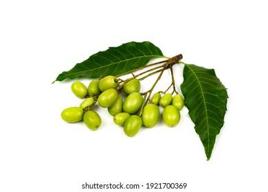 Fresh Neem fruit and neem leaf isolated on white background.