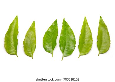 Fresh neem leaves on a white background.