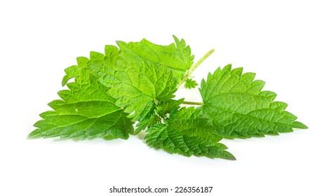 Fresh nettle leaves on white background