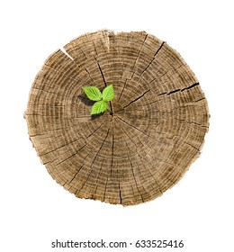 Fresh new green growth of a sprout or plant from an old dead logo. Wood texture with cracks and age. Business concept for annual report.
