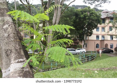 Fresh new green tree shoots coming out from tree bark side view shot with blurred background