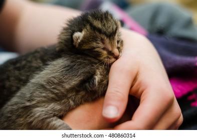 Fresh newborn kitty under good care