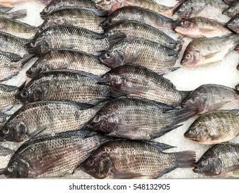 Fresh Nile Tilapia in market