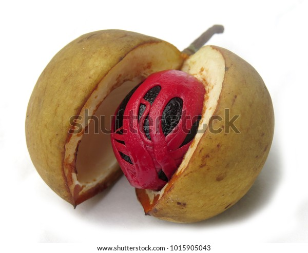Fresh nutmeg spice and its mace and outer shell