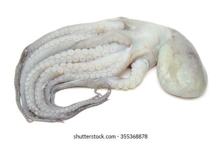 Fresh octopus isolated on white background